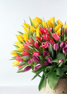 tulip bouquet hd picture