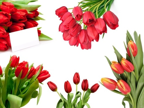tulip bouquet of highdefinition picture