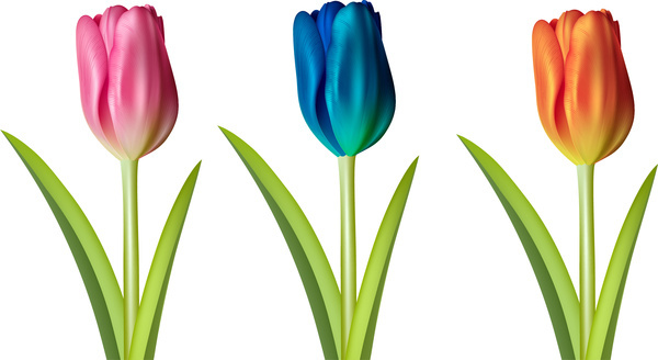 tulip flower vectors free vector download 10 725 free vector for
