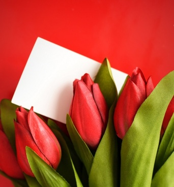 Free tulip flower images free stock photos download 10924 free tulip flowers highdefinition picture 05 thecheapjerseys Image collections