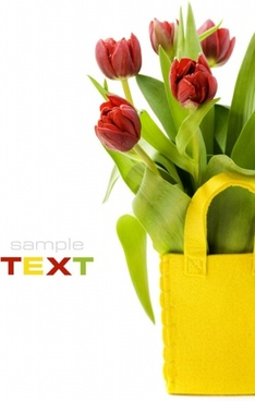 tulip hd pictures