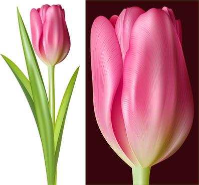 tulip pink vector graphics
