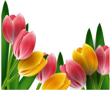 tulips frames vector