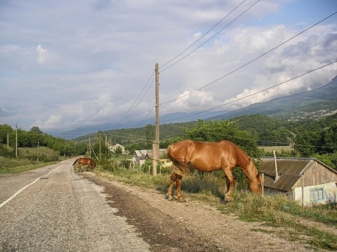 turkey horses road