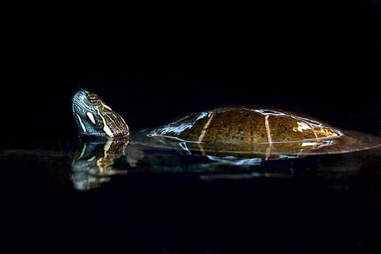turtle spa