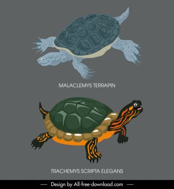 turtle species icons classic dark colored decor