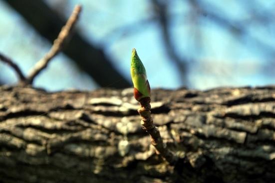 twig bloom grow