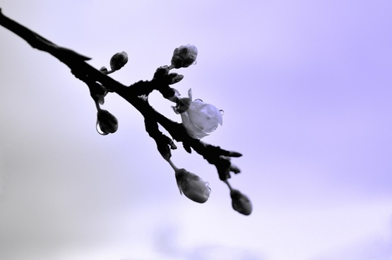 twig tree in spring
