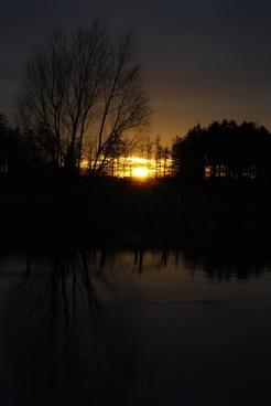 twilight sunset trees
