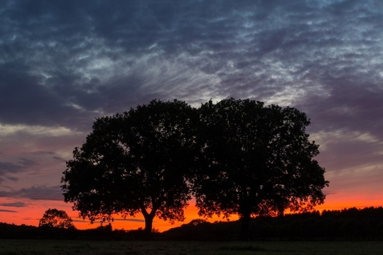 twin trees and a burning horizon