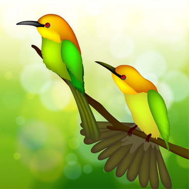 two bird on tree branch