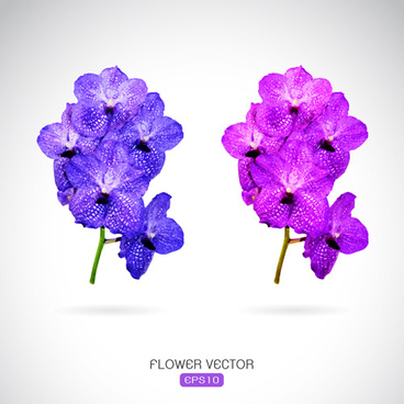 two purple flowers vector graphics