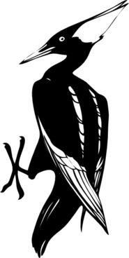 Uccello Bianco E Nero clip art
