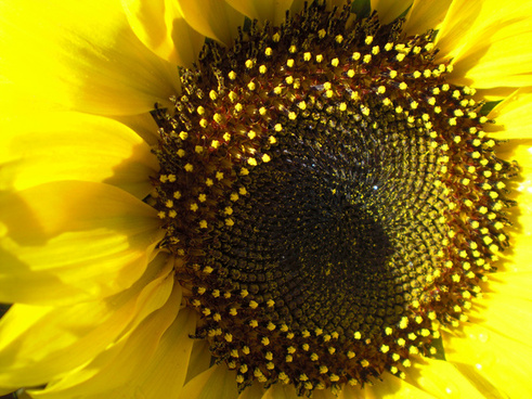 una mirada al universo de la naturaleza explore may809 no 188