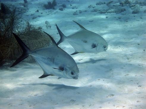 underwater fish diving