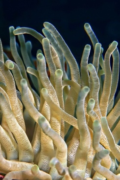 underwater plant coral