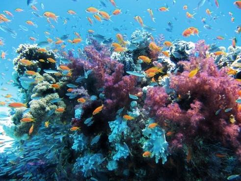 underwater sea fish