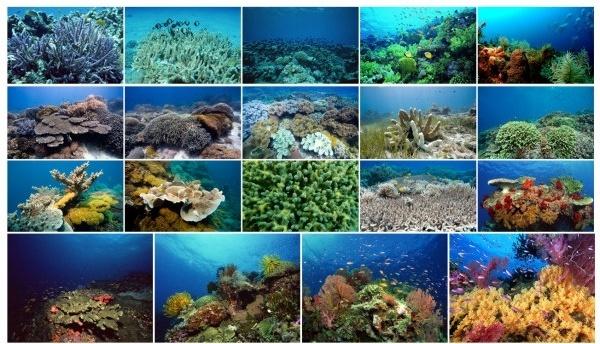 underwater world figure grade background