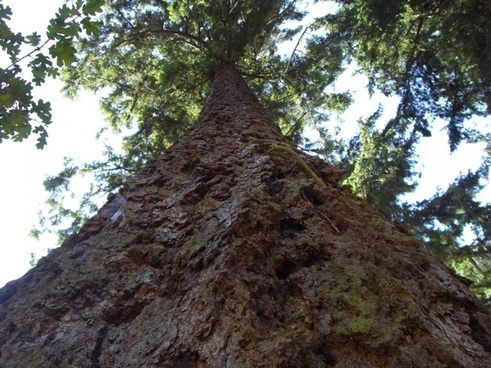 up a huge tree