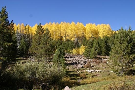 utah forest trees