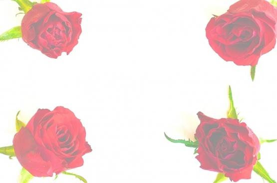 valentin paper rose