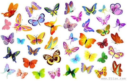 variety of beautiful butterfly vector