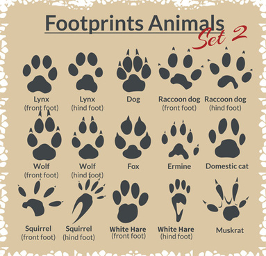footprint free vector download 122 free vector for commercial use format ai eps cdr svg vector illustration graphic art design footprint free vector download 122