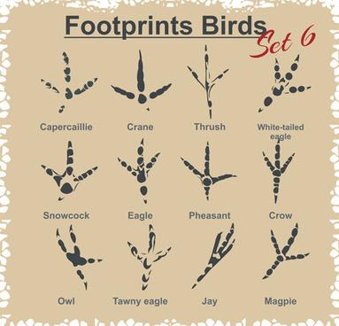 various footprints animals design vectors