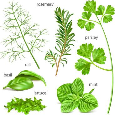 various herbs vector