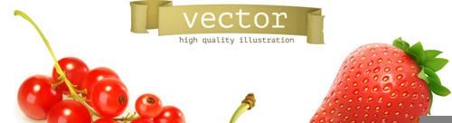 various juicy fruits illustration vector
