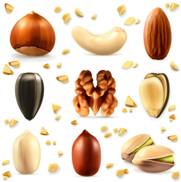 various nuts realistic vector set