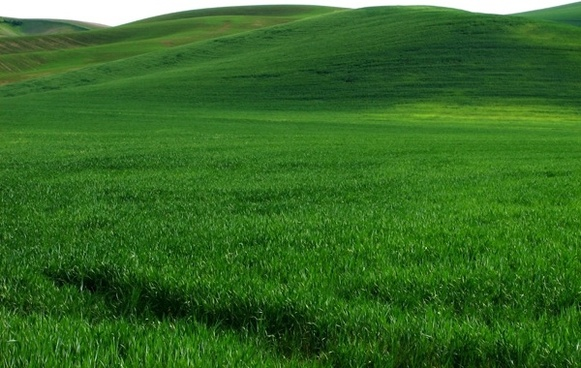 vast expanse of green grass hd picture