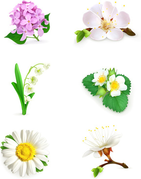 vector beautiful flowers design set