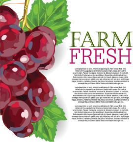 vector farm fresh fruit background design