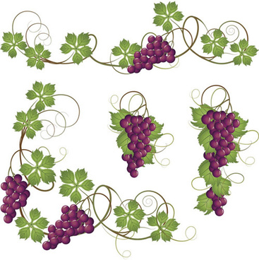 vector juicy grapes design graphic set