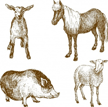 vector line art animal lamb horse