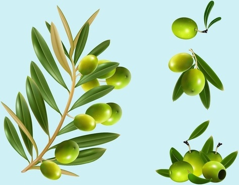 vector olives food vector graphics