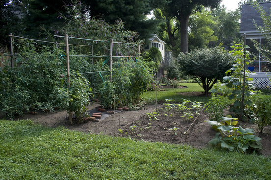 vegetable garden july 26