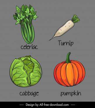 vegetables icons handdrawn celeriac turnip cabbage pumpkin sketch