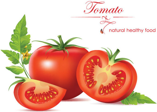 vegetables tomato vector graphics