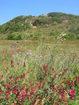 vegetation plant summer