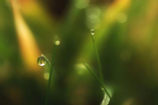 verdi grass