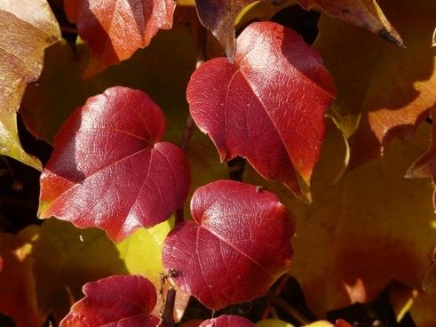 vine leaves wine partner coloring