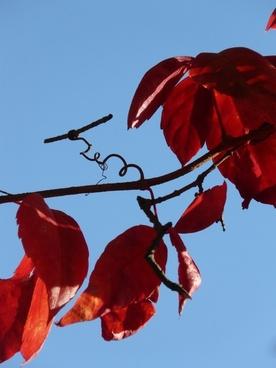 vine wine partner autumn