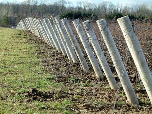 vineyard agriculture farming