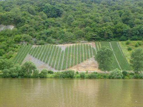 vineyard heart germany