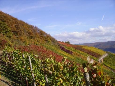 vineyard vines fall foliage