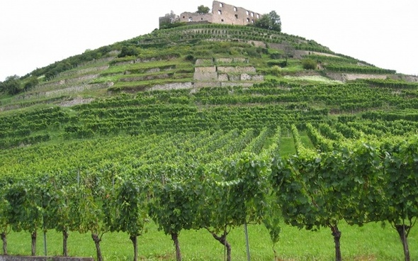vineyards ruin castle