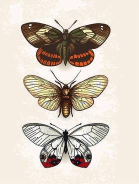 vintage butterflies specimen design vector