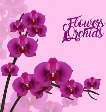 violet orchids background 3d design